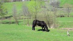 Black horse Stock Footage