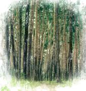 In the wood Stock Illustration