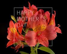 Happy Mothers day flower background Stock Photos