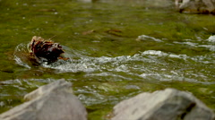 Virginia Mountain Stream Slo-Mo Stock Footage
