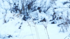 Dry Grass Under Snow, Static Shot - stock footage