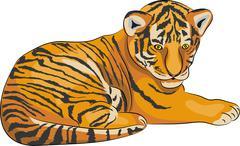 Vector tiger. Piirros