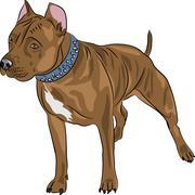 Vector Staffordshire terrier dog breed Stock Illustration