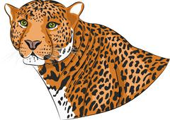 Vector head of a jaguar. Stock Illustration