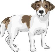 Stock Illustration of vector Jack Russell Terrier
