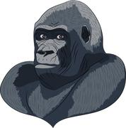 Vetor head gorilla. Stock Illustration