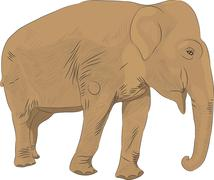 Indian elephant vector Stock Illustration