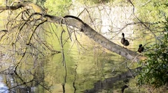 Lake Shore birds on tree branch, Banyoles, Girona, Spain Stock Footage