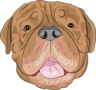 vector Bordeaux mastiff - stock illustration