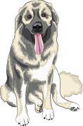 Caucasian Shepherd Dog - stock illustration