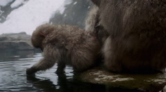 Baby snow monkey playing in hot spring Stock Footage
