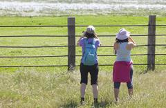 Young women observing flamingos Stock Photos
