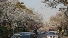 Cherry blossoms in full bloom at Chidorigafuchi, Tokyo, Japan Stock Footage