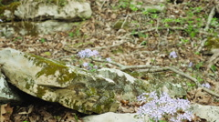Mammoth Cave National Park Wildflowers of the Forest Stock Footage