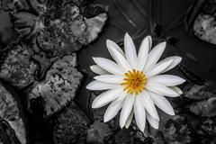 Spiritual Identity. (B&W) - stock photo