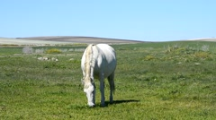 White horse in the countryside, staying relaxed Stock Footage