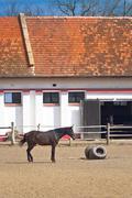 Beautiful Brown Chestnut Horse on the Animal Farm Stock Photos