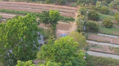 Aerial footage of longan and lychee fruit agriculture - stock footage