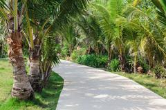 Stock Photo of Road to the palm grove