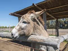 Donkey on a farm - stock photo