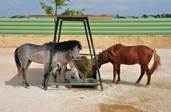 skyros pony horses hay feeder - stock photo