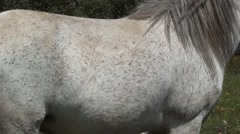 White mottled horse out at grass zoom out Stock Footage
