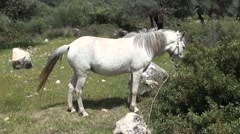 White horse out at grass Stock Footage