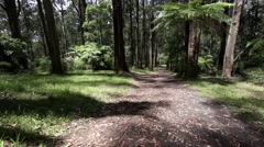 Slow panning view of Australian Eucalyptus and Tree Fern forest near Melbourne Stock Footage