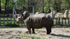 Big rhinoceros in zoological garden Stock Footage