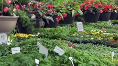 Greenhouse full of plants Stock Footage