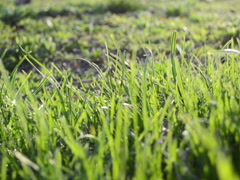 Background from a grass. Related clips are in my portfolio in 1920x1080. Stock Footage