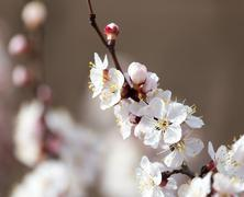 Beautiful flowers on a tree in spring Stock Photos