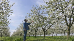 Stock Video Footage of Agriculture, agronomist or farmer examine blooming cherry trees in orchard