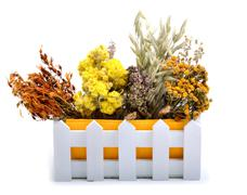 Herbs, calendula flower, oats, immortelle flower, tansy herb isolated on whit - stock photo