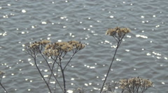 River, dried flowers Stock Footage
