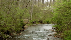 Mountain river spring dogwood blooms Stock Footage