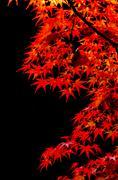 Stock Photo of Colorful Autumn Leaf season