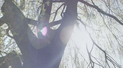 Springtime Willow Tree Sunshine Lens Flare - 25FPS PAL Stock Footage