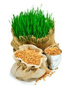 Wheat grass, whet grains in the sack isolated on white Stock Photos