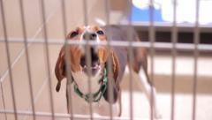 Dog barking Stock Footage