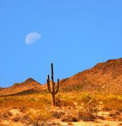 Sonora Desert Moon Stock Photos