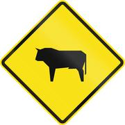 Cattle Crossing In Chile - stock illustration