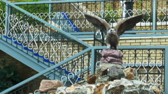 Sculpture of an eagle Stock Footage