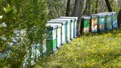 Stock Video Footage of Beekeeping, bees and hives