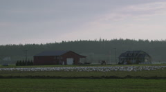 Skagit Valley Snow Geese Stock Footage