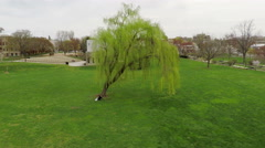 3412 Aerial Student Studying Under Willow Tree at a Park in Town, 4K Stock Footage