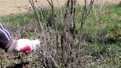 Whitewashing tree trunks Stock Footage