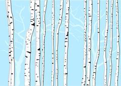 Birch trees Stock Illustration