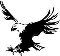 Flying eagle Piirros