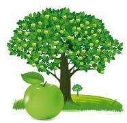 Apple with apple tree  Stock Illustration